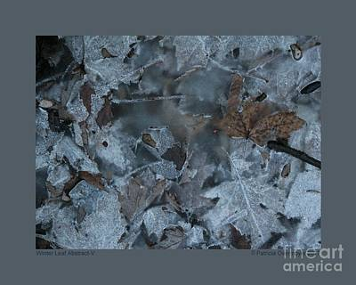 Photograph - Winter Leaf Abstract-v by Patricia Overmoyer
