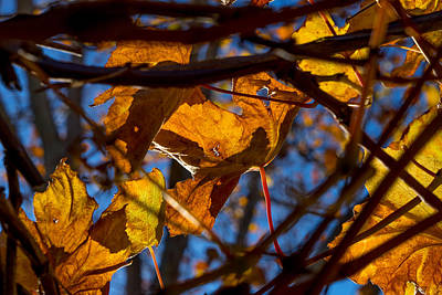 Photograph - Winter Leaf by Derek Dean