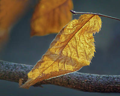 Photograph - Winter Leaf by Nikolyn McDonald
