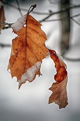 Digital Art - Winter Leaf by Patrick Groleau