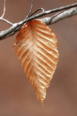 Photograph - Winter Leaf Smithtown New York by Bob Savage