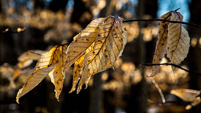 Photograph - Winter Leaves Left by Glenn DiPaola