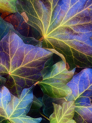 Photograph - Winter Leaves by Tara Turner