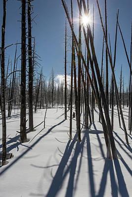 Photograph - Winter Light by Jack Bell