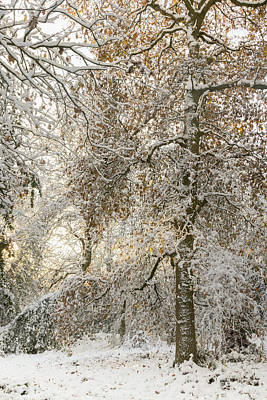 Photograph - Winter Light by Kathryn Bell