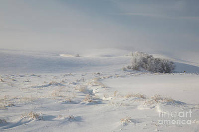 Photograph - Winter Light On The Palouse by Idaho Scenic Images Linda Lantzy