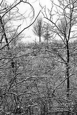 Photograph - Winter Lines by Karen Adams