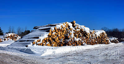 Photograph - Winter Logs by Olivier Le Queinec