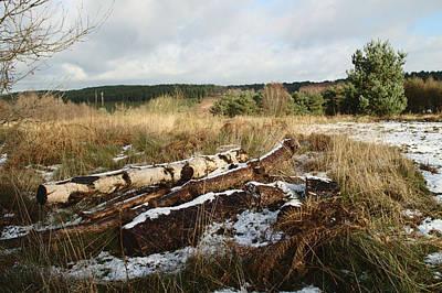 Winter Logs On Hednesford Hills Art Print