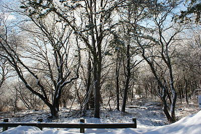 Photograph - Winter by Lois Lepisto