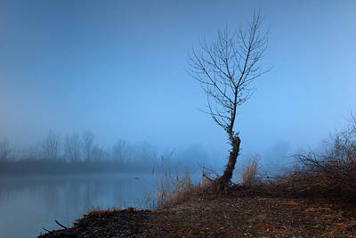 Photograph - Winter Loner by Davor Zerjav