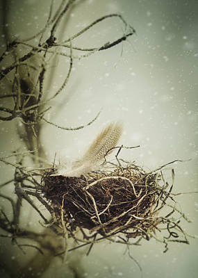 Print featuring the photograph Winter Lullaby by Amy Weiss