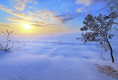 Photograph - Winter Magic by Dan Jurak