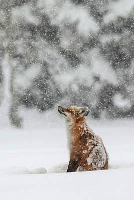 Winter Storm Photograph - Winter Magic by Sandy Sisti