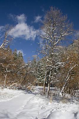 Winter Original by Mark Smith
