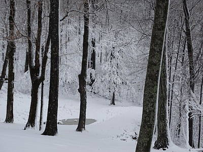 Photograph - Winter by Mary Halpin