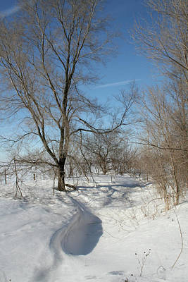 Photograph - Winter Meander by Dylan Punke