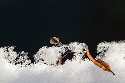 Photograph - Winter by Michael Mogensen