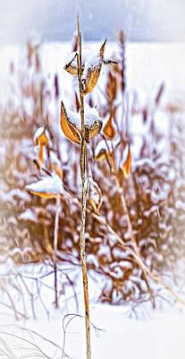Photograph - Winter Milkweed 4 - Paint by Steve Harrington