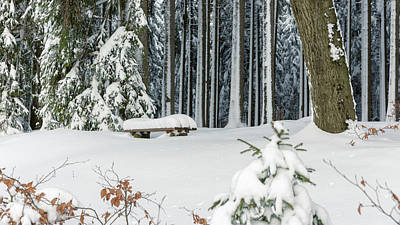 Photograph - Winter Moments In Harz Mountains by Andreas Levi
