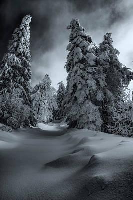 Photograph - Winter Mood 27/02/2018 by Plamen Petkov