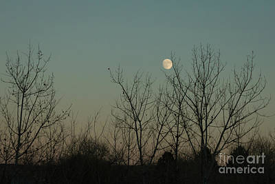 Photograph - Winter Moon by Ana V Ramirez