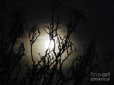 Photograph - Winter Moon by Silken Photography
