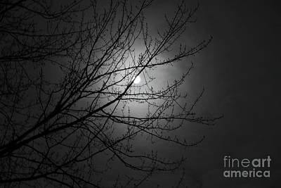Photograph - Winter Moonlight by Ann Horn
