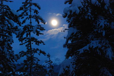 Photograph - Winter Moonlight by Jan Piet