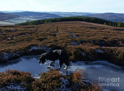 Photograph - Winter Moorland by Phil Banks