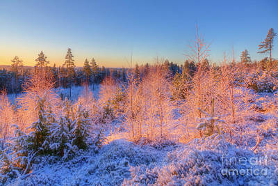 Hoarfrost Wall Art - Photograph - Winter Morning 3 by Veikko Suikkanen