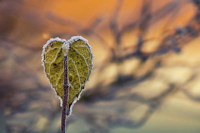 Priska Wettstein Land Shapes Series - Winter Morning by Stelios Kleanthous