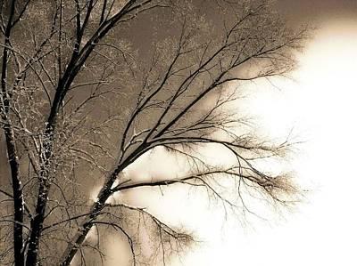 Winter Mulberry  Art Print by Larry Ney  II