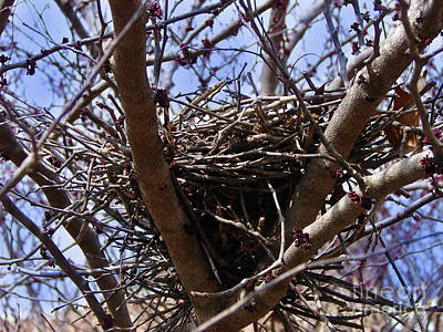 Photograph - Winter Nest by Laura Brightwood