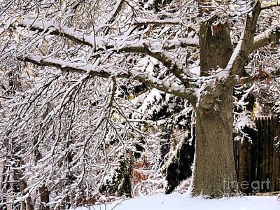 Photograph - Winter Oak by Janice Drew