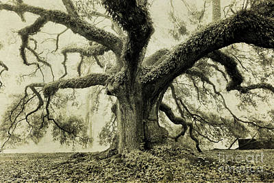 Winter Oak Art Print by Scott Pellegrin