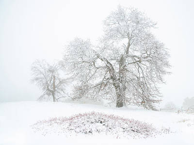 Photograph - Winter Oaks by Alexander Kunz