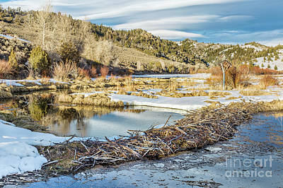 Winter On Beaver Swamp Art Print