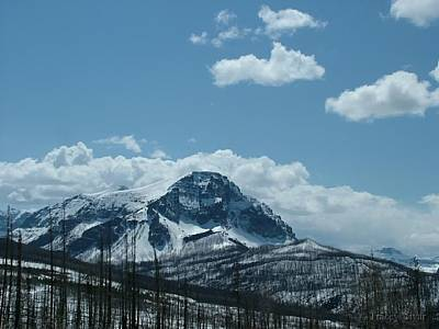Photograph - Winter On Divide Mountain, After The Fire by Tracey Vivar