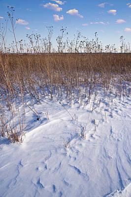 Winter On The Prairie Original by Steve Gadomski