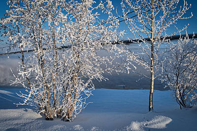 Photograph - Winter On The Tanana - Transalaska Pipeline by Cathy Mahnke