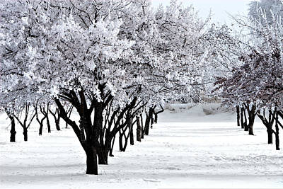 Photograph - Winter Orchard by David Andersen