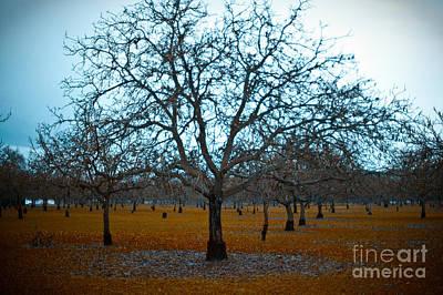 Winter Orchard Art Print