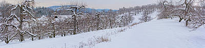 Photograph - Winter Orchards by Angelo Marcialis
