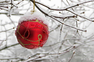 Photograph - Winter Ornament by Frank Townsley