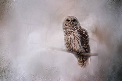 Photograph - Winter Owl by Jai Johnson