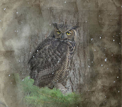 Photograph - Winter Owl by Marilyn Wilson