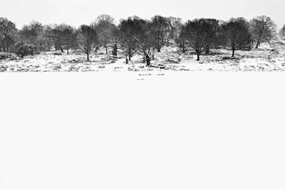 Photograph - Winter Park by Marek Stepan