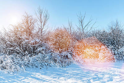 Photograph - Winter Park With Frosty Trees And Lots Of Snow. by Michal Bednarek