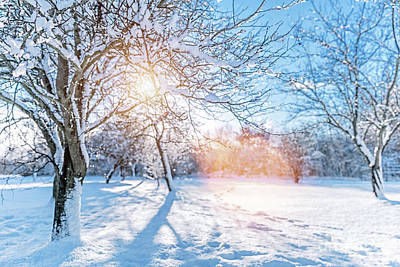 Photograph - Winter Park With Frosty Trees And Lots Of Snow On A Sunny Day by Michal Bednarek